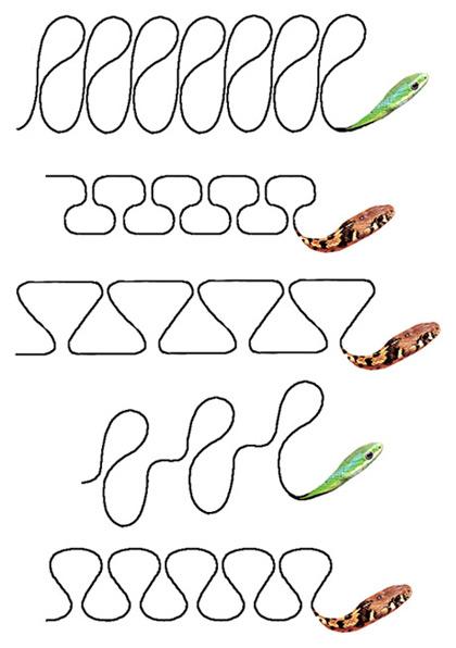 Какие совершенно разные цепочки!  Рис. 2-12.  Траектории змейки из бисера.